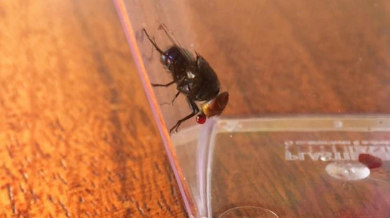 Researchers build annoying indestructible robotic insects