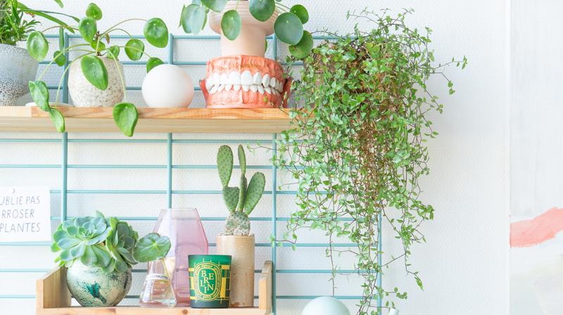 Beginner's guide to indoor plants. (All Photos: Judith de Graaff)