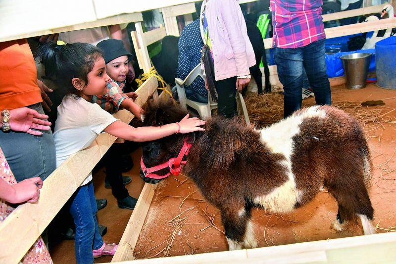 Kids at the venue pet a pygmy pony