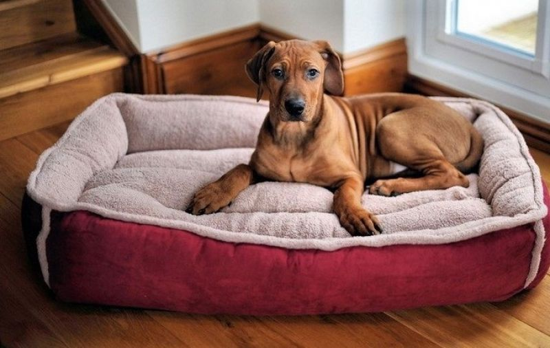 Avoid using a dinghy pillow or rug as your pet's resting area which will end up messing with your home's interiors.
