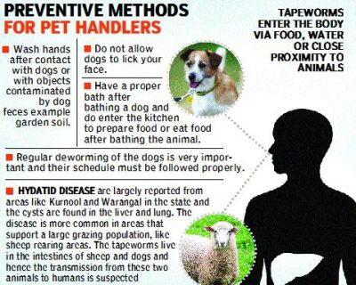 Beware Your Pet Love Can Give You A Killer Disease