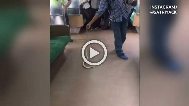 Snake on a train: man kills slippery passenger on Jakarta train