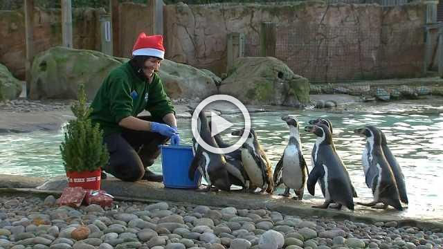 Animals celebrate Christmas at London Zoo