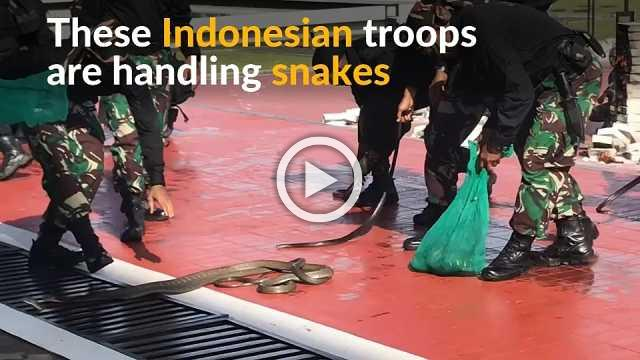 Mattis watches on as Indonesian troops handle snakes