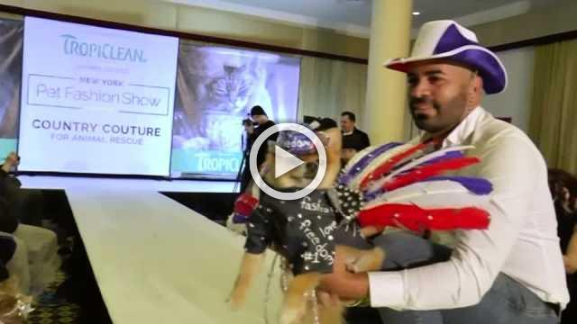 Pooches strut their stuff in dog fashion show