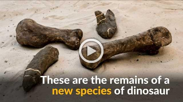 New dinosaur species discovered in Mexico