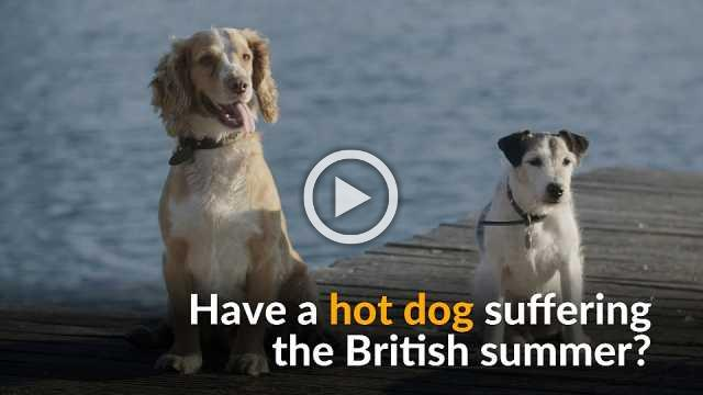 Hot dogs cool off at a London swimming gala