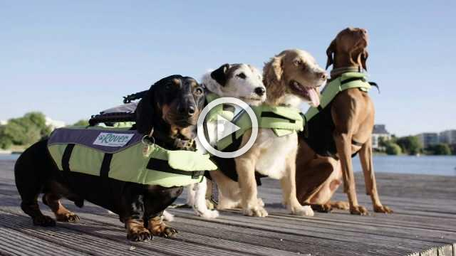 Hot dogs cool off with canine swimming gala