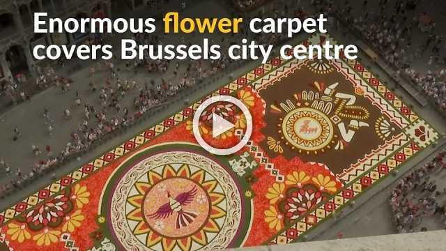 Huge flower carpet blooms outside Brussels' iconic Grand Place