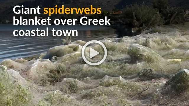Coast of Greek town disappears under a blanket of spiderwebs