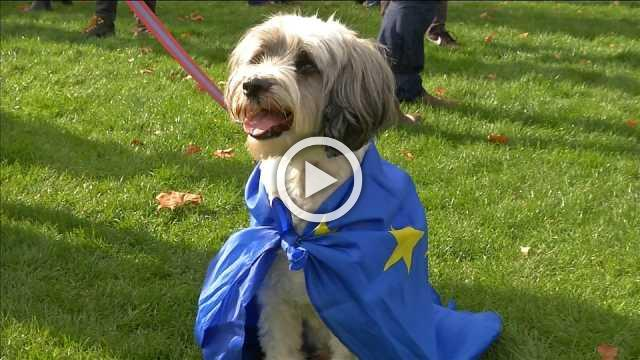'Brexit is barking' - 1,000 dogs protest UK's EU exit