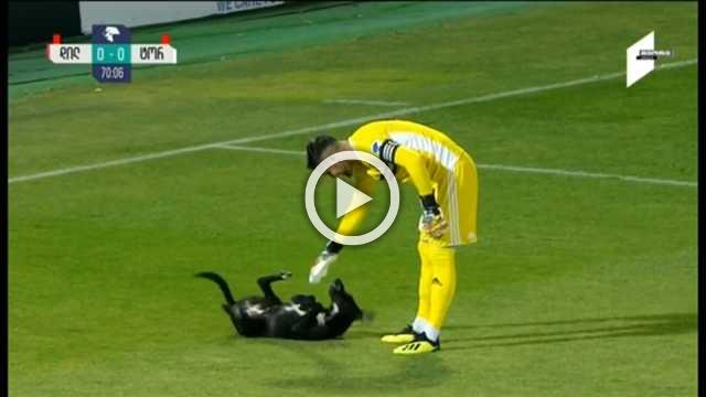 Dog pitch invasion becomes highlight of Georgia soccer game