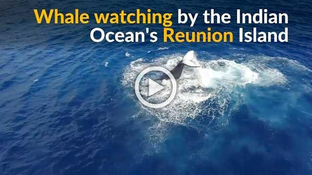 Humpback whale takes swipes at over-eager watchers