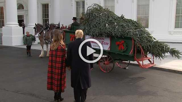 The Trumps receive White House Christmas tree