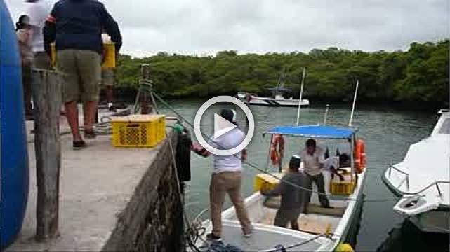 Land iguanas return to Santiago Island in the Galapagos