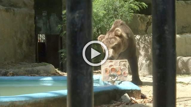 Ice cream helps Rio bear cool down in summer heat