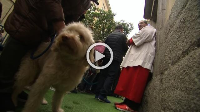 Pets get blessed at Madrid church