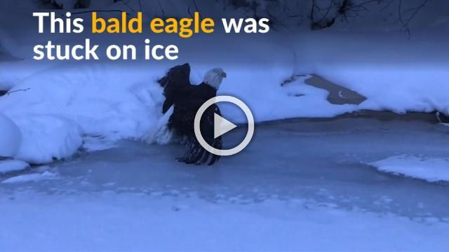 Volunteers melt ice to help eagle return to the wild