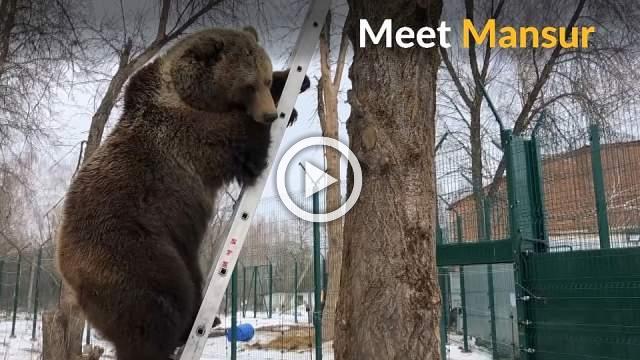 Russian pilots adopt orphan bear
