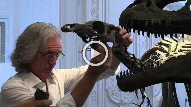 Up for auction: Two dinosaur skeletons