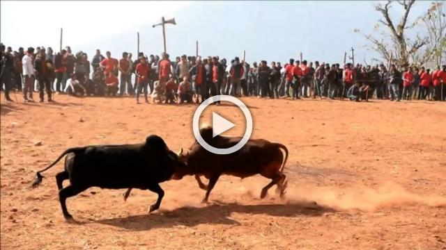 Nepalis watch bullfighting festival