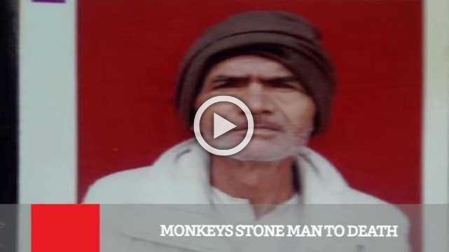 Monkeys Stone Man To Death