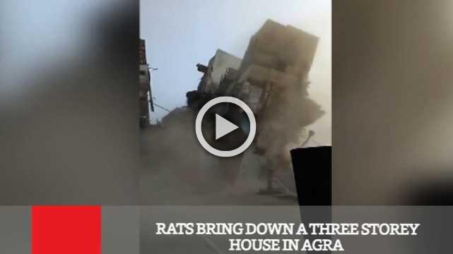 Rats Bring Down A Three Storey House In Agra