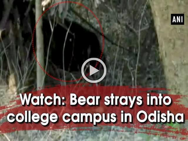Watch: Bear strays into college premises in Odisha