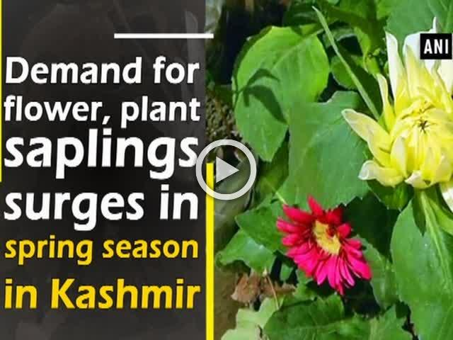 Demand for flower, plant saplings surges in spring season in Kashmir