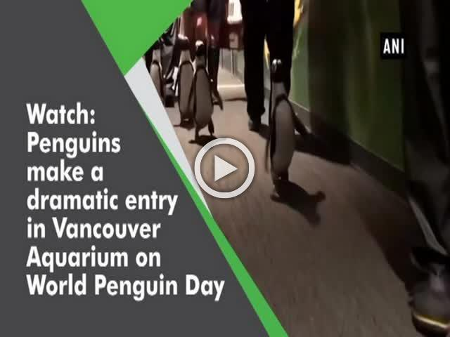 Watch: Penguins make a dramatic entry in Vancouver Aquarium on World Penguin Day