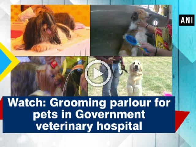 Watch: Grooming parlour for pets in Government veterinary hospital