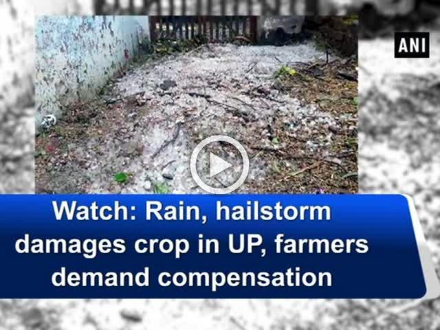 Watch: Rain, hailstorm damages crop in UP, farmers demand compensation
