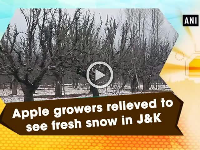 Apple growers relieved to see fresh snow in J&K