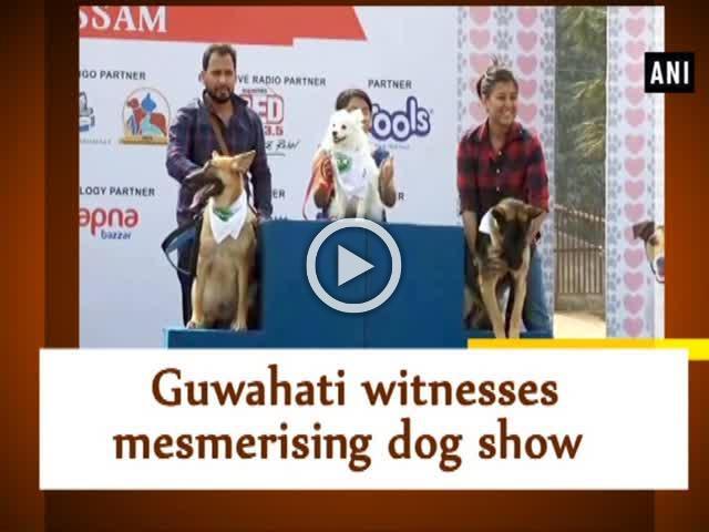 Guwahati witnesses mesmerising dog show