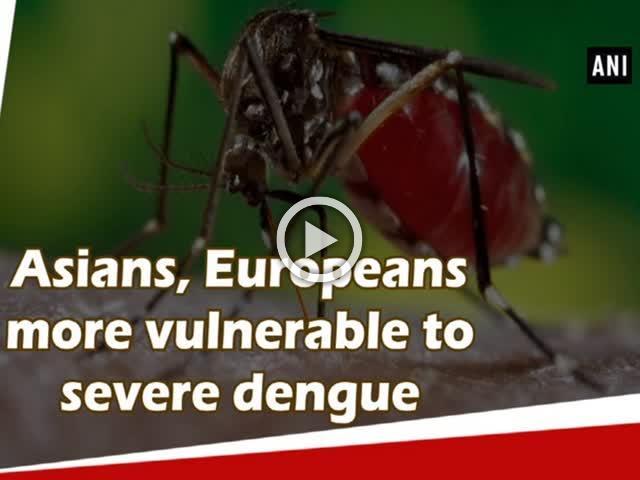 Asians, Europeans more vulnerable to severe dengue