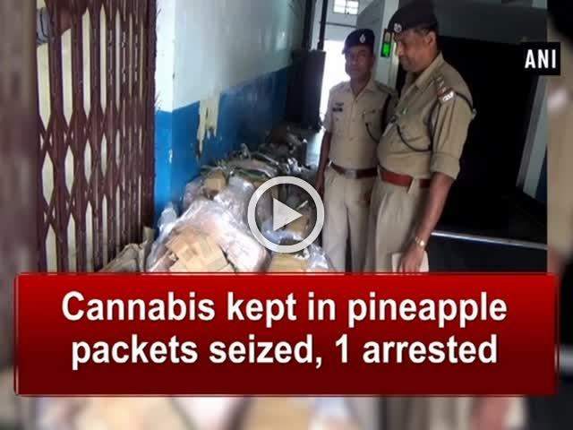 Cannabis kept in pineapple packets seized, 1 arrested