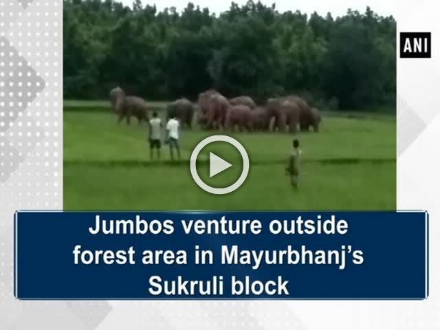Jumbos venture outside forest area in Mayurbhanj's Sukruli block
