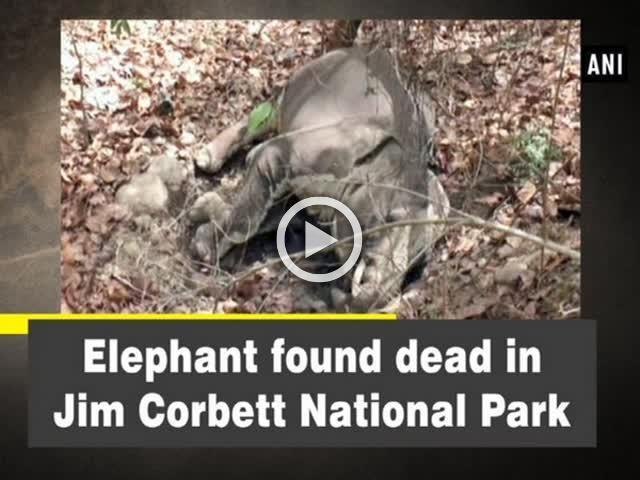 Elephant found dead in Jim Corbett National Park