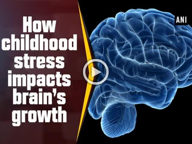How childhood stress impacts brain's growth