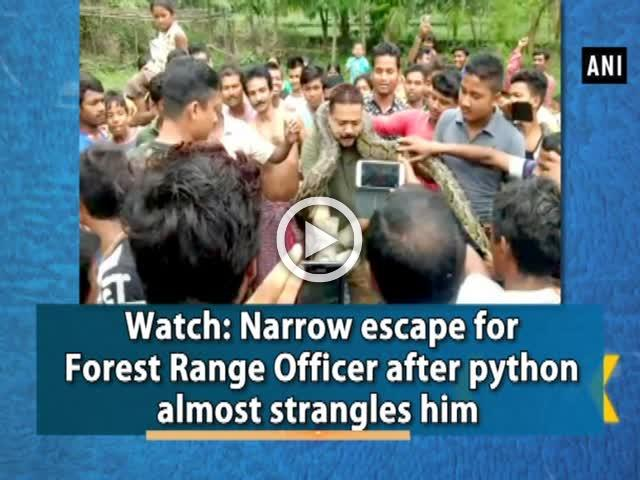 Watch: Narrow escape for Forest Range Officer after python almost strangles him