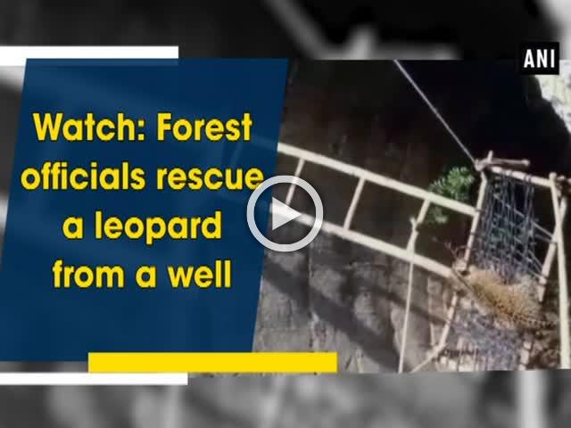 Watch: Forest officials rescue a leopard from a well