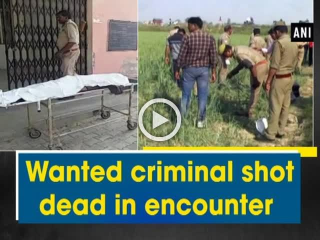 Wanted criminal shot dead in encounter