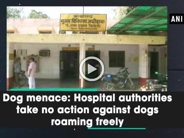 Dog menace: Hospital authorities take no action against dogs roaming freely