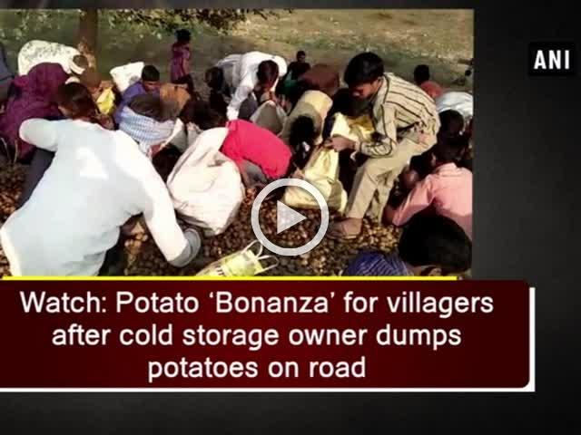 Watch: Potato 'Bonanza' for villagers after cold storage owner dumps potatoes on road