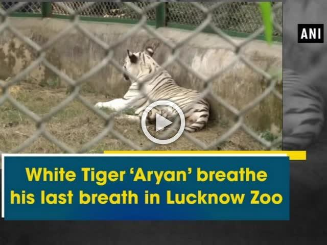 White Tiger 'Aryan' breathe his last breath in Lucknow Zoo
