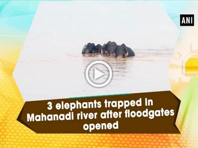 3 elephants trapped in Mahanadi river after floodgates opened