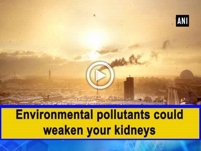 Environmental pollutants could weaken your kidneys