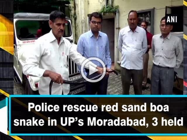 Police rescue red sand boa snake in UP's Moradabad, 3 held