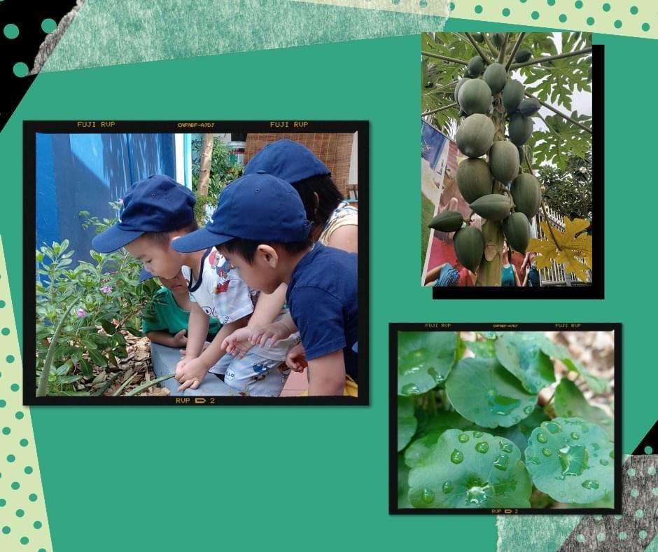 Vườn xanh Kinder Academy