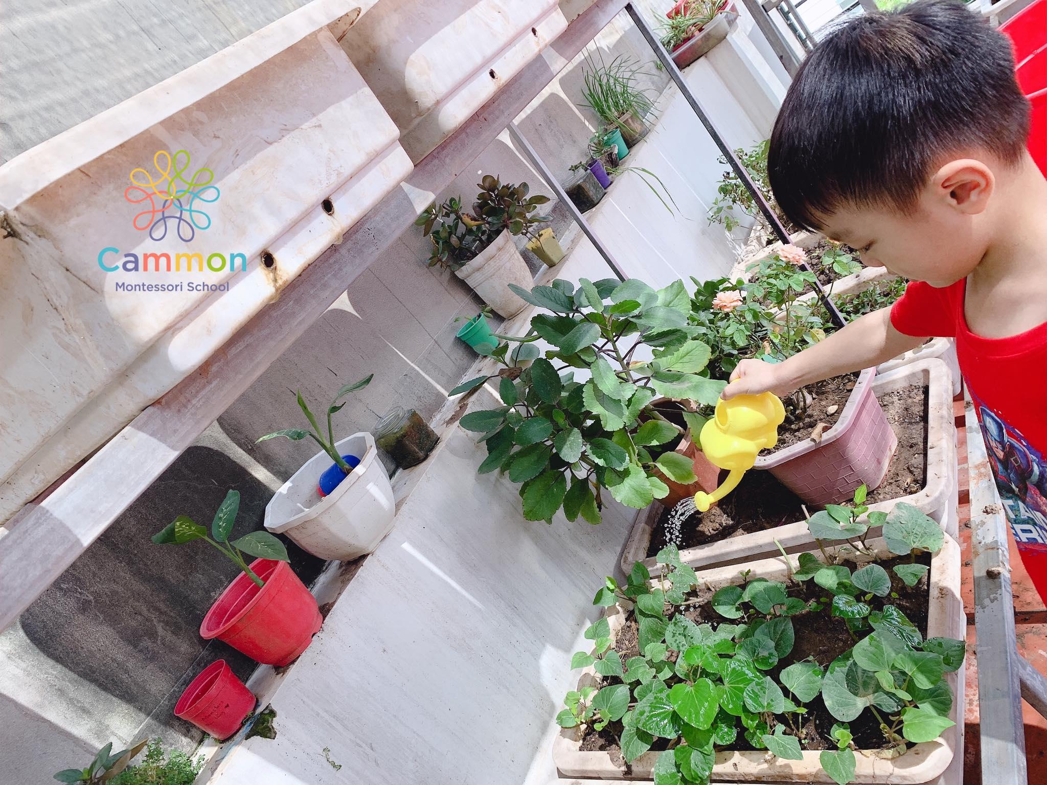Trường mầm non Cammon Montessori (Hoa Trà My Group) - Phạm Tuấn Tài, Cầu Giấy